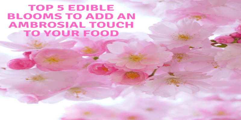 edible blooms to add an ambrosial touch to your food